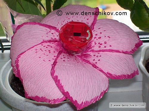 Цветы почтой наложенным платежом